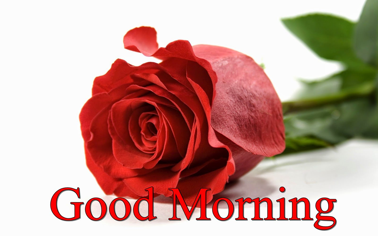 Good Morning Rose Season Flowers Nature Wallpaper - Good Morning Happy New Year 2018 - HD Wallpaper