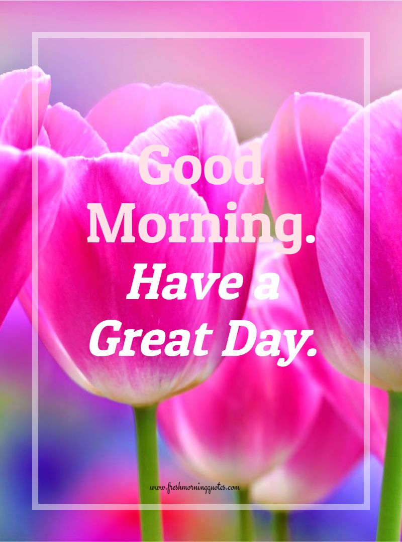 Good Morning Tulip Flower Good Morning Flowers And Quotes 800x1080 Wallpaper Teahub Io