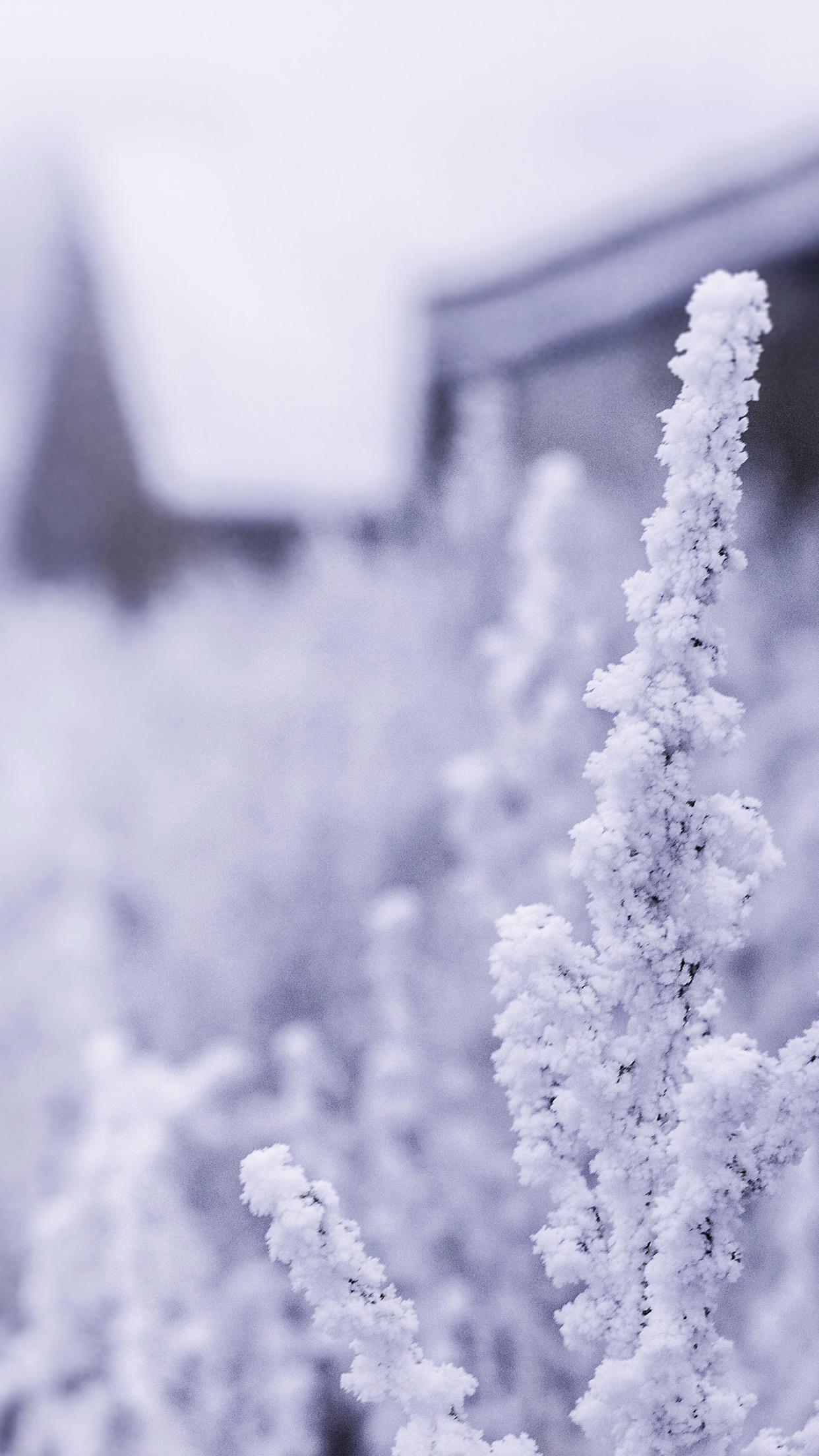 Iphone 6 Wallpaper White Flower 1242x2208 Wallpaper Teahub Io