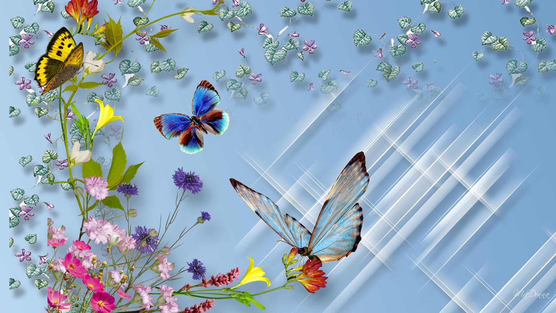 Hd Wallpaper Download Butterfly 1920x1080 Wallpaper Teahub Io