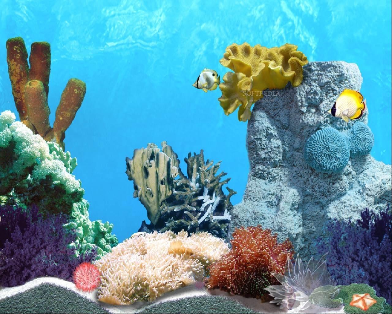 Fish Mobile Wallpaper - Animated Fish Backgrounds For Desktop - HD Wallpaper