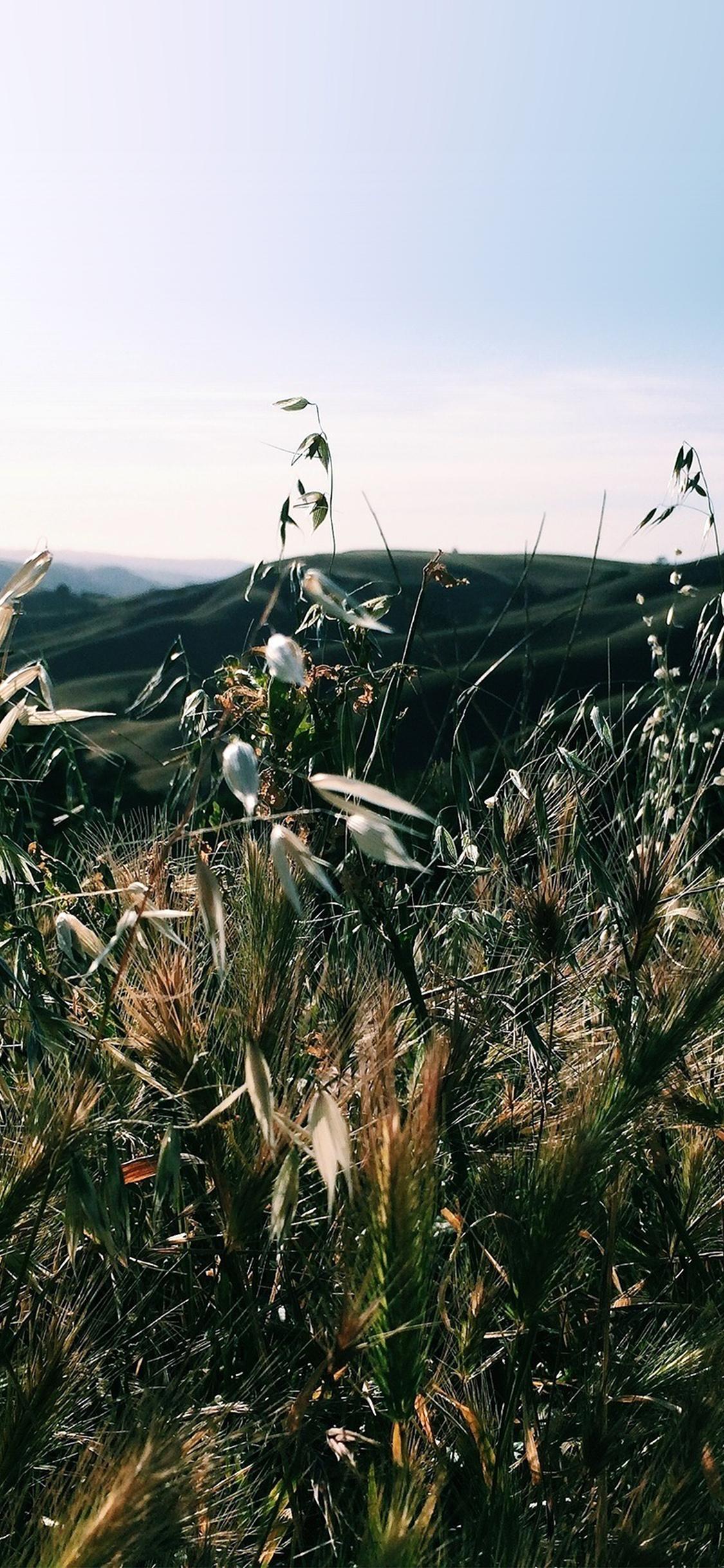 Com Apple Iphone Wallpaper My79 Sunny Summer Day Green - Dark Summer Grass - HD Wallpaper
