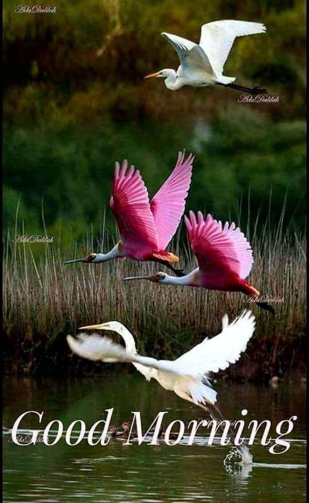 Good Morning Images Birds - 1080x1757 ...