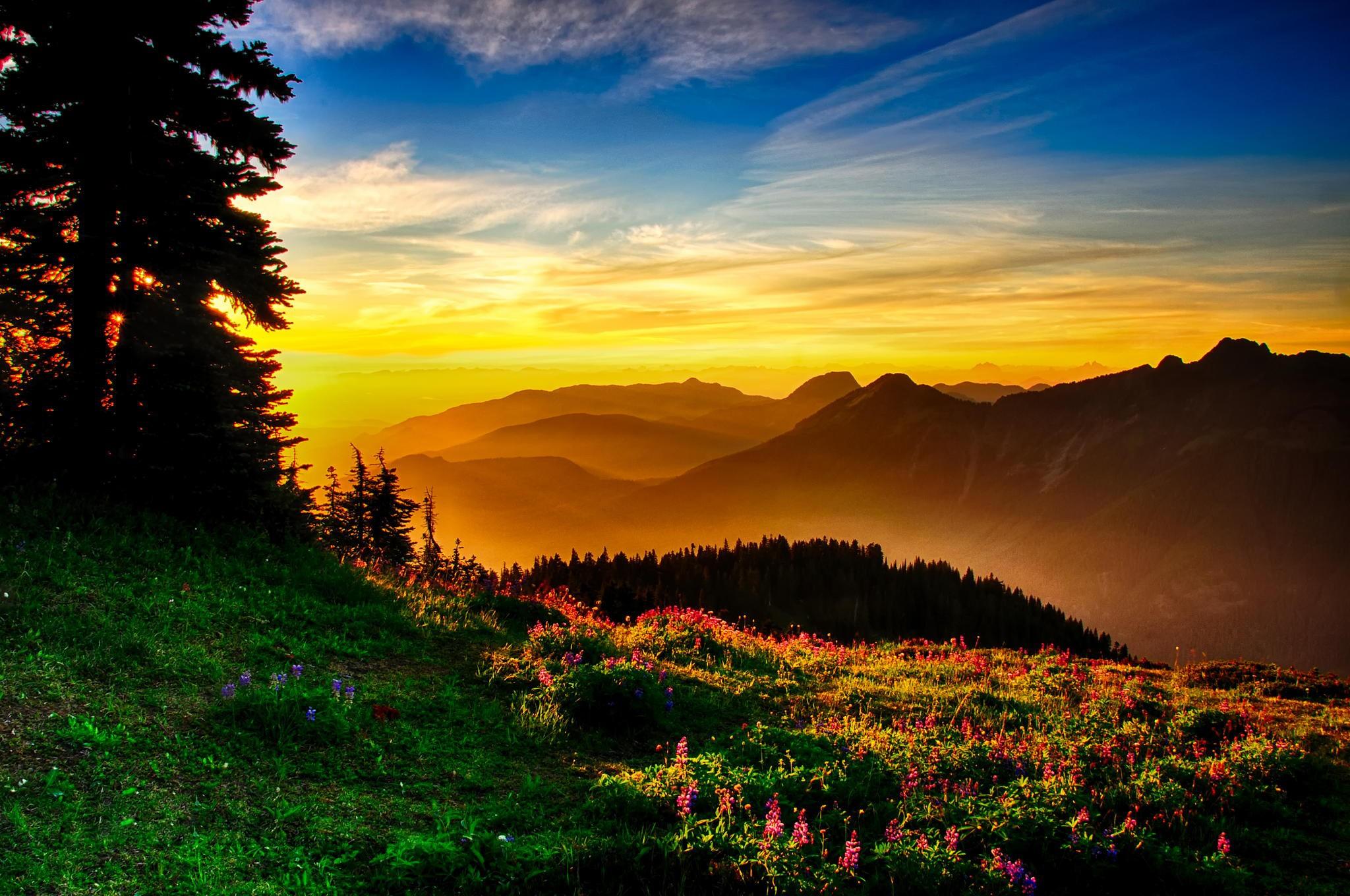 Hd Nature Wallpapers, Flowers, Windows 10, Mac Wallpaper, - Nature Windows 10 Background - HD Wallpaper