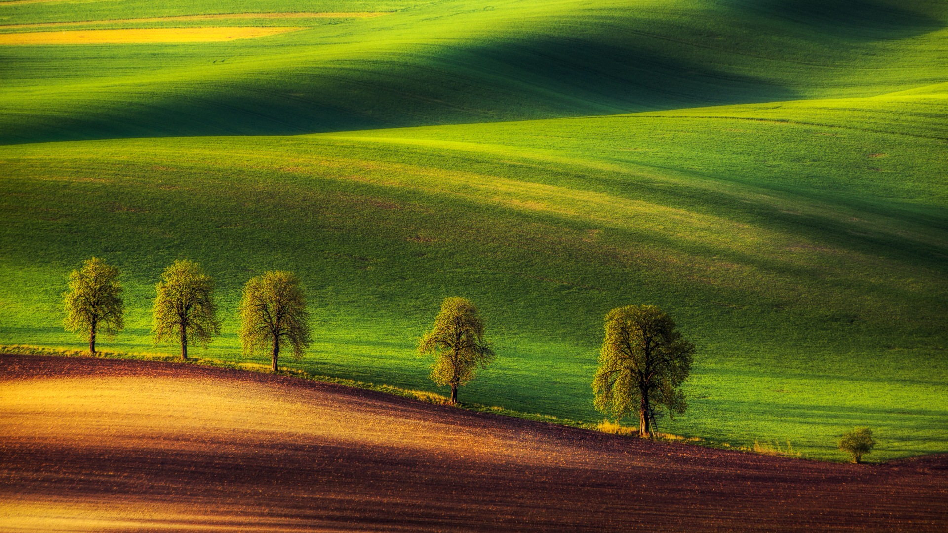 Windows 10 Preview Wallpapers Pack - Green Ground Wallpaper Hd - HD Wallpaper