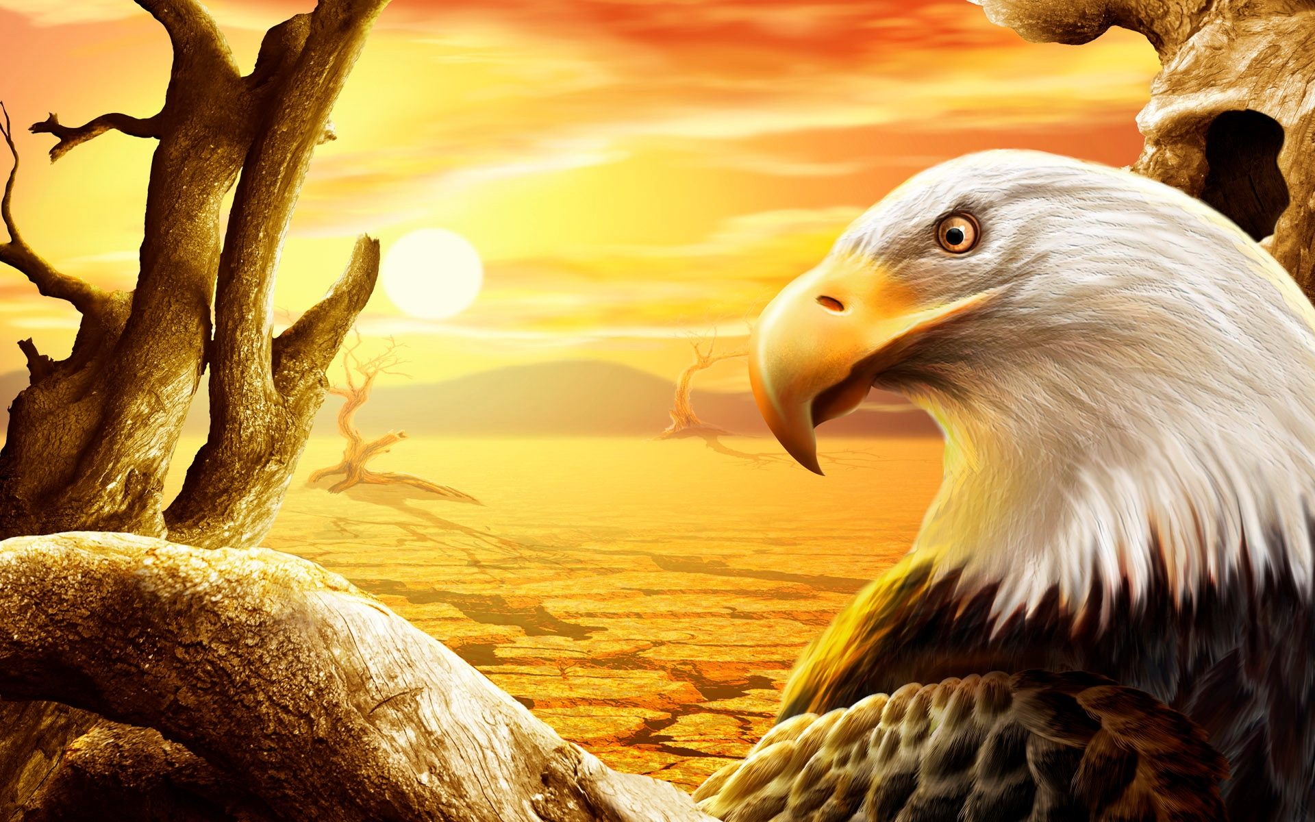 Amazing 3d Wallpapers For Pc Eagle Wallpaper Hd 1600x1000 Wallpaper Teahub Io