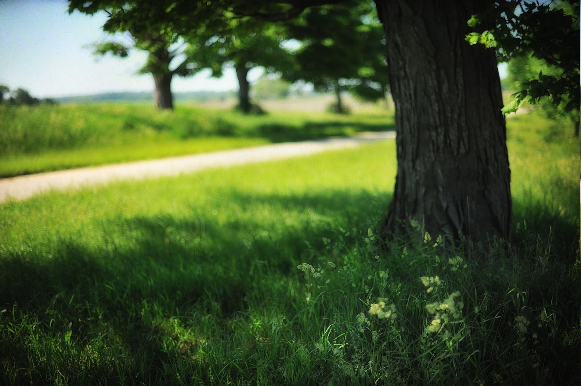 1923x1280, Landscape, Field, Trees, Grass, Summer, - Grass - HD Wallpaper