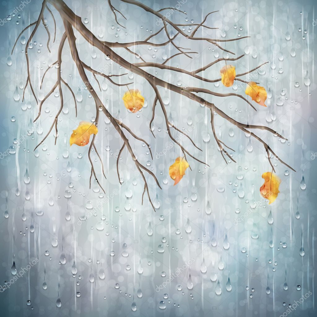 335 3356670 autumn rain background