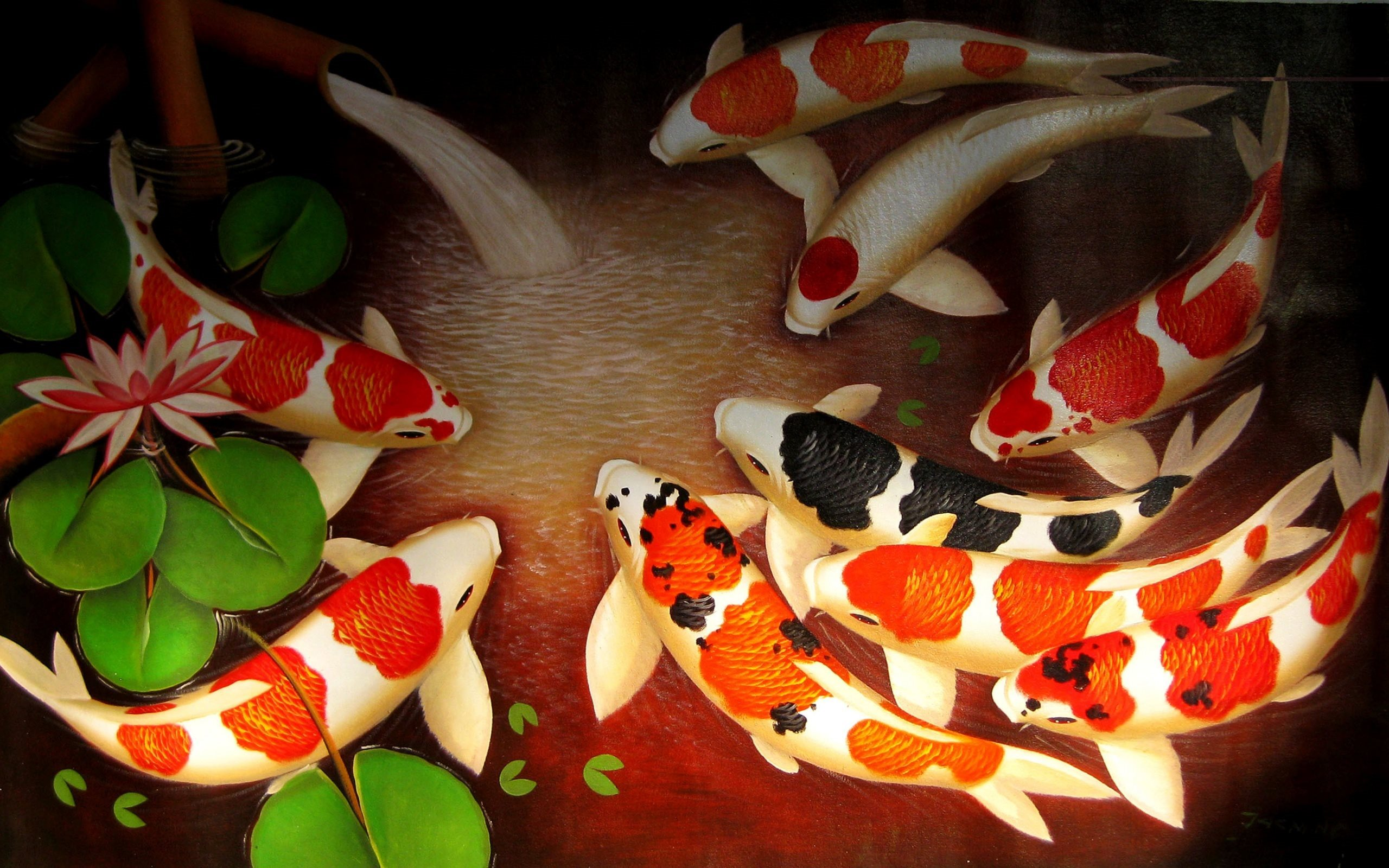 Brocade Carp Koi Fish Colored Carp Japan Koi Koi Fish High Resolution 2560x1600 Wallpaper Teahub Io