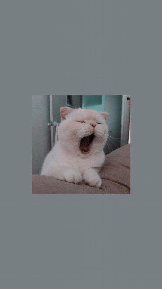 Cat Wallpaper Aesthetic 539x960 Wallpaper Teahub Io