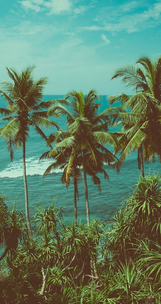Aesthetic Home Screen Tropical - HD Wallpaper