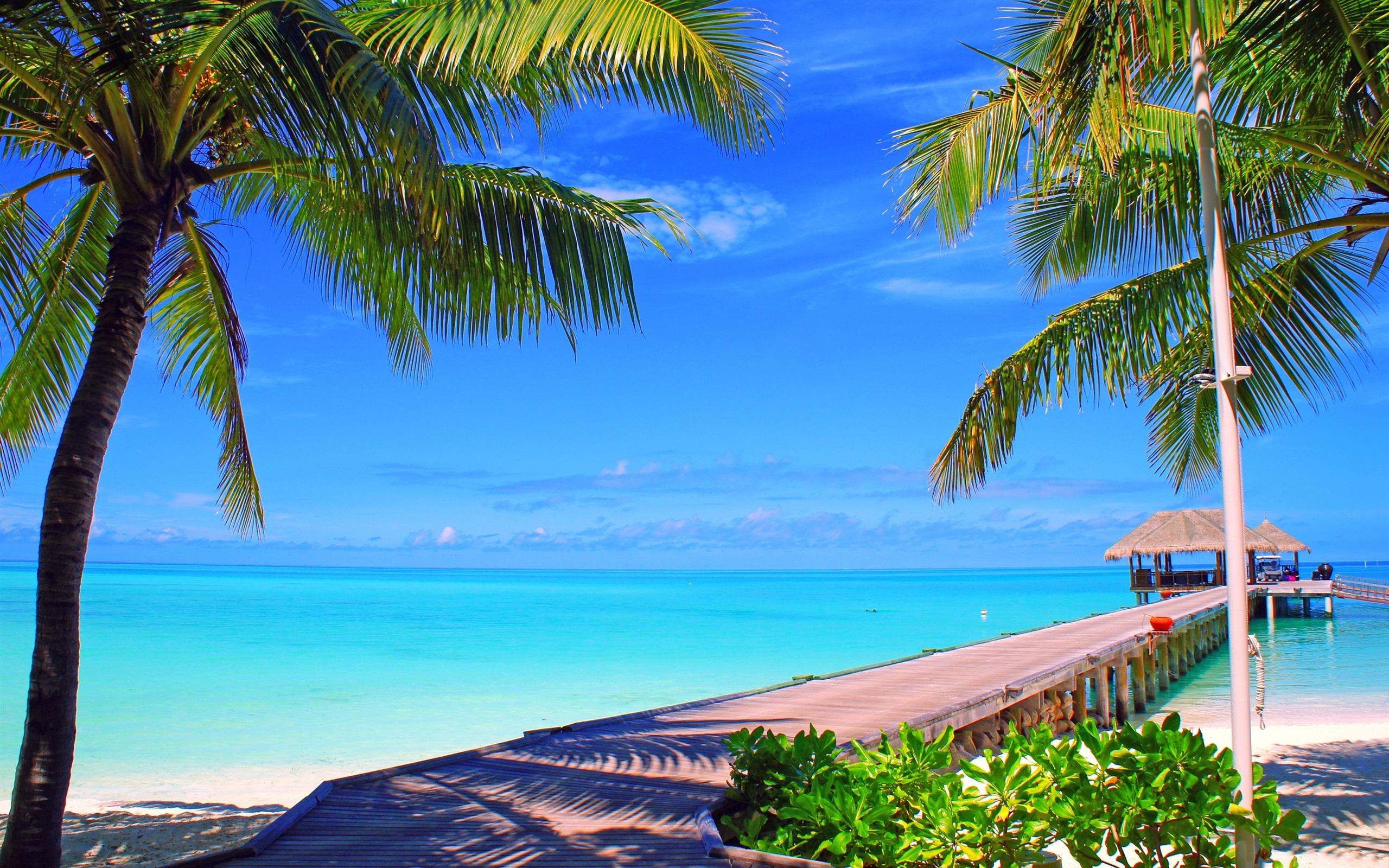Wallpaper Maldives, Island, Palm Trees, Bridge, Bungalows, - Tropical Beach Background Hd - HD Wallpaper