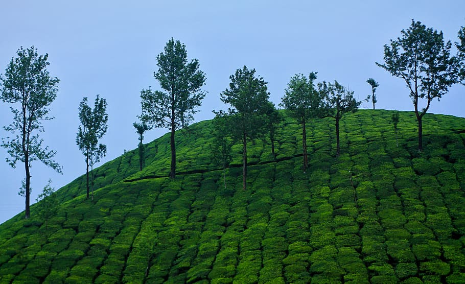 Nature, Landscape, Travel, Outdoors, Green, Kerala, - Nature Place In India - HD Wallpaper