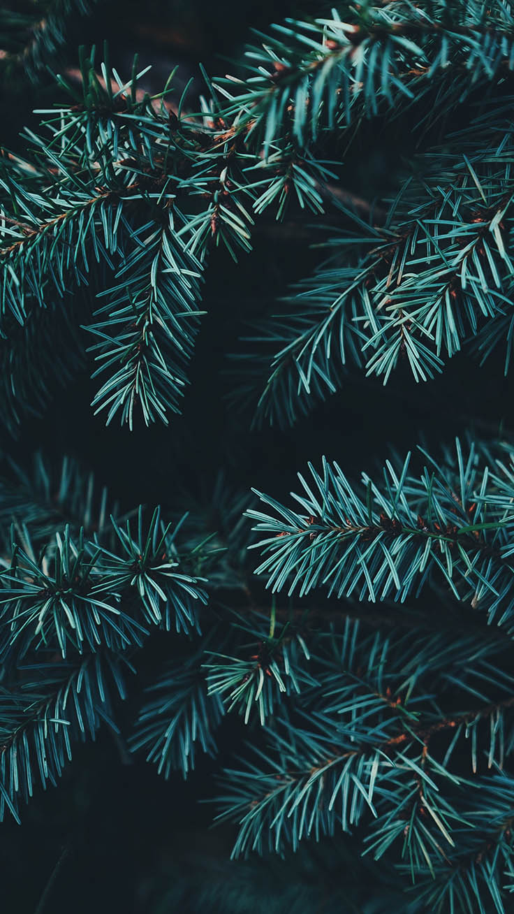 Happy Holidays Enjoy 35 Christmas Iphone Wallpapers - Pine Tree Iphone Background - HD Wallpaper
