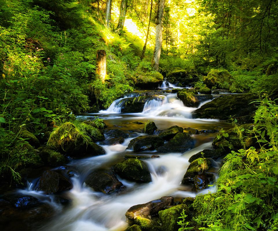 Nature Wallpapers Free Download For Mobile - River Through A Forest - HD Wallpaper