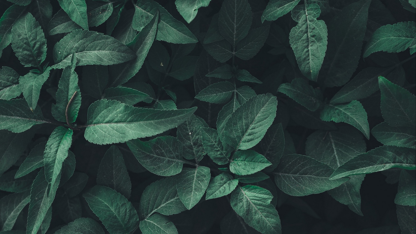 Wallpaper Leaves Green Plant Aesthetic Nature Background Green 1366x768 Wallpaper Teahub Io