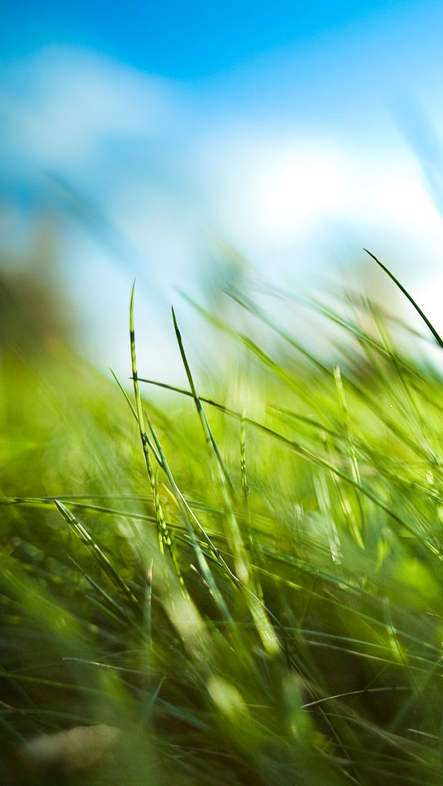1000 Images About Iphone & Android On Pinterest - Iphone Nature Wallpaper Green - HD Wallpaper