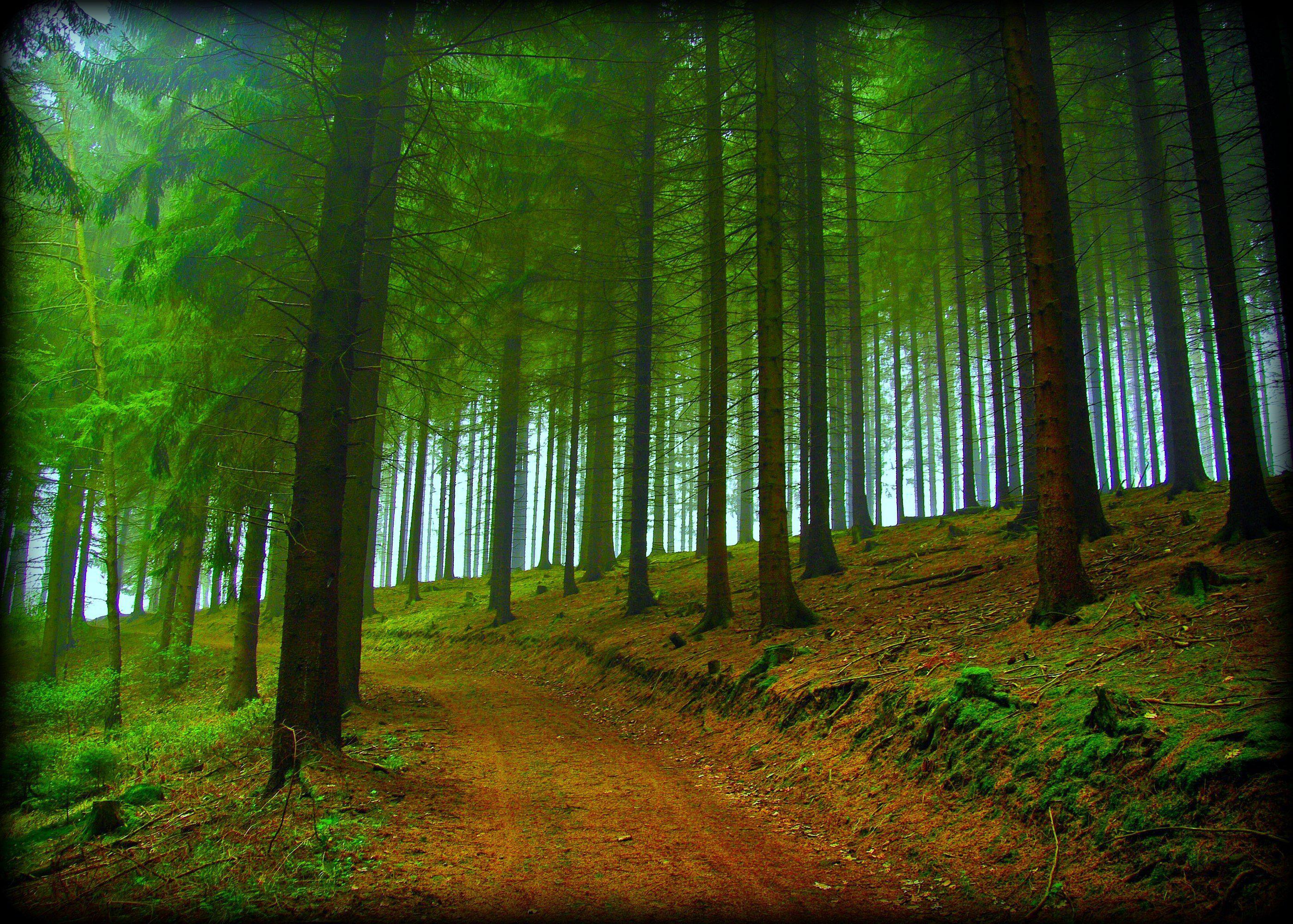 Hd Forest Trees Road Nature Fog Free Desktop Background - Tree Forest Hd Background - HD Wallpaper