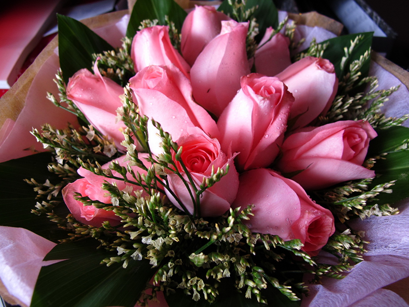 Rose Beautiful Colorful Flowers - HD Wallpaper