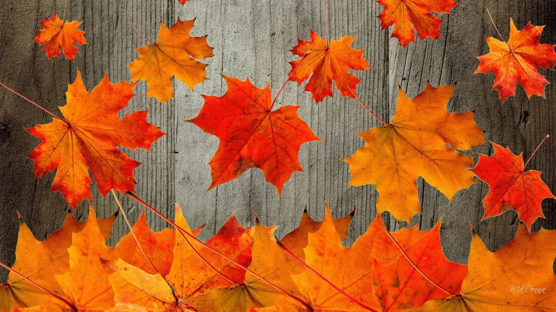 Free Fall Wallpapers For Desktop9   Data Src - Fall Desktop Backgrounds - HD Wallpaper