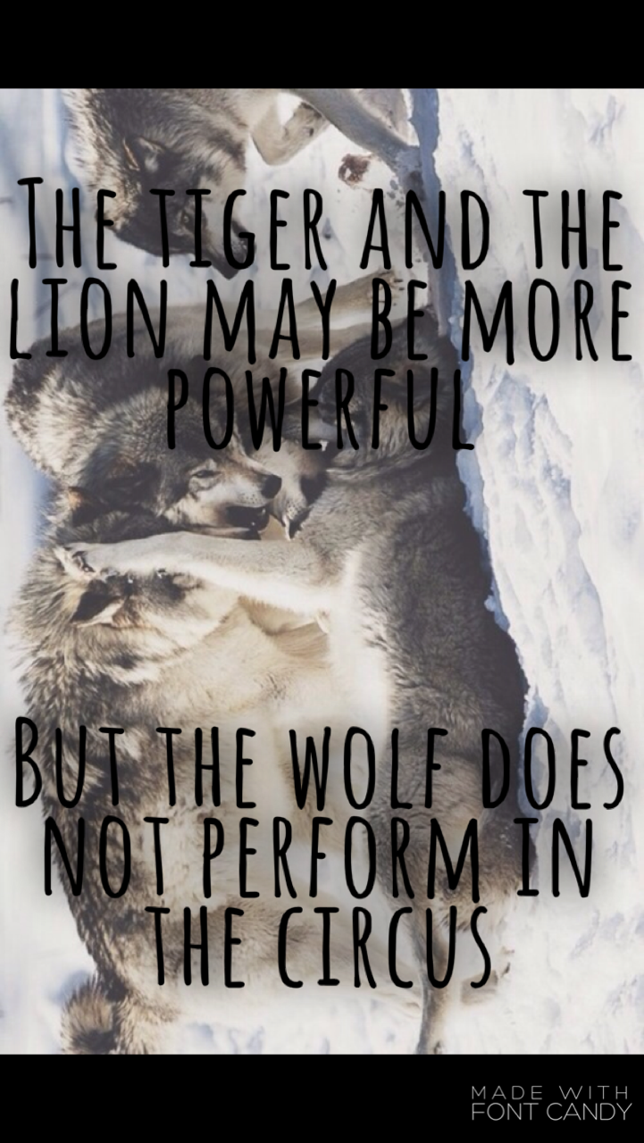 Lion Quote The Tiger And The Lion May Be More Powerful, - Wolf Quote Wallpaper Iphone - HD Wallpaper