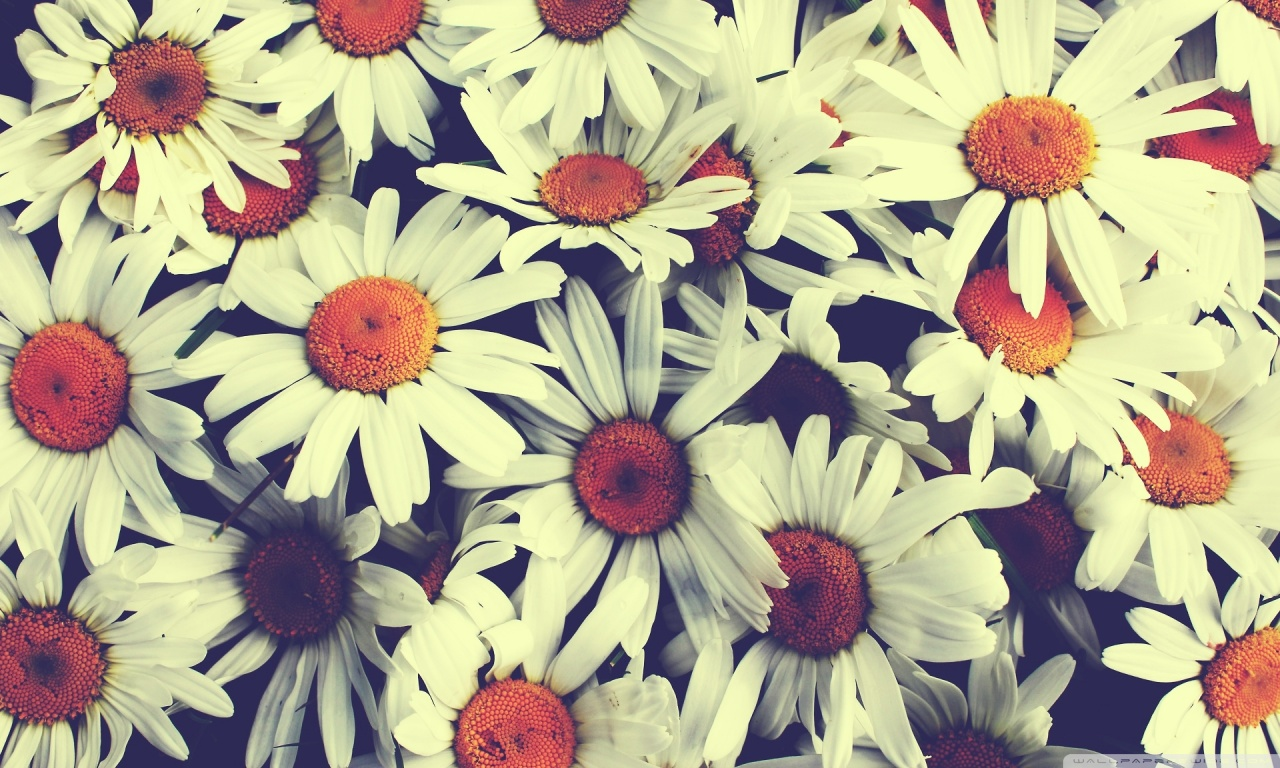 Flower Tumblr Quotes Background - HD Wallpaper