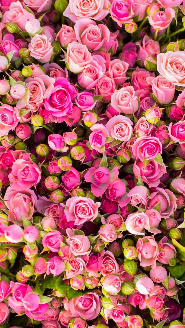 Best 25 Rose Wallpaper Ideas On Pinterest Screensaver, - Beautiful Wallpaper Roses - HD Wallpaper