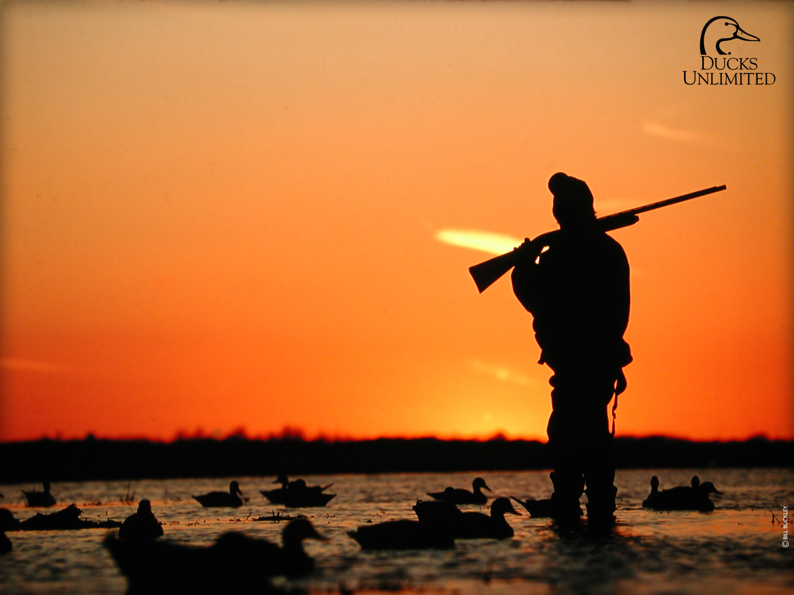 Duck Hunting Backgrounds - HD Wallpaper