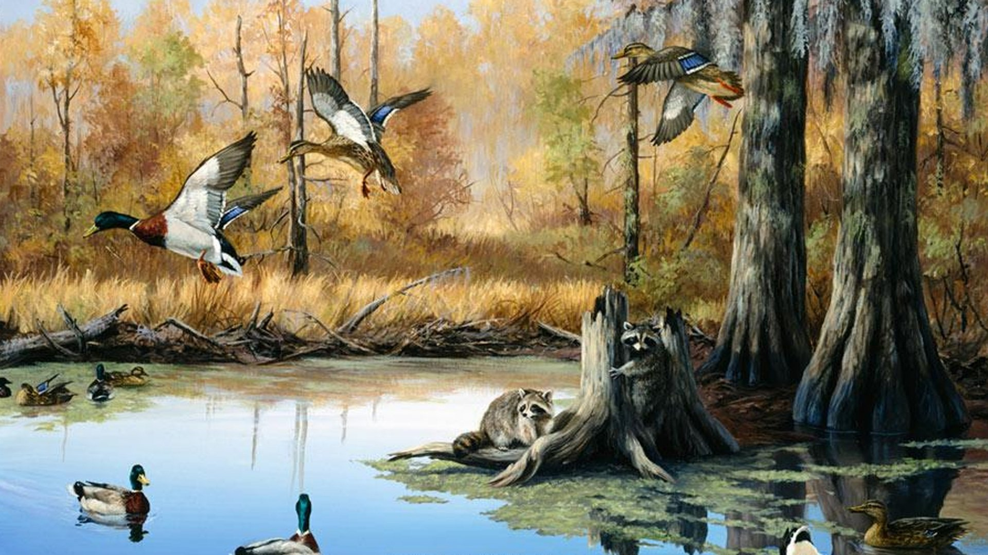 Duck Hunting Laptop Background - HD Wallpaper