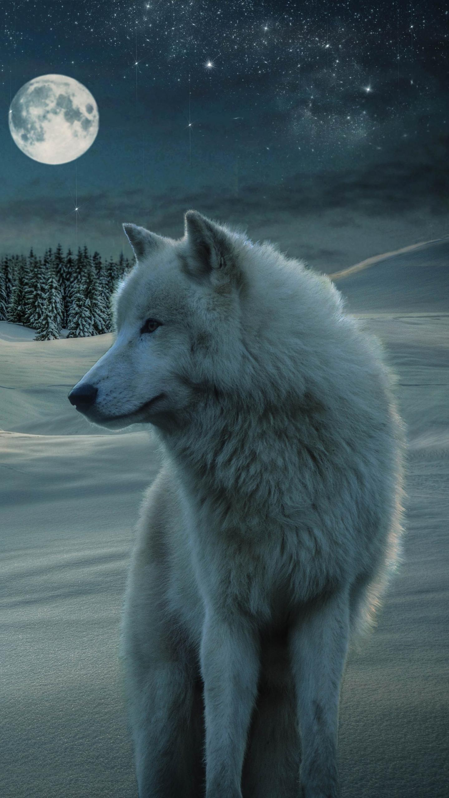 4 40111 wolf wallpaper 4k for mobile