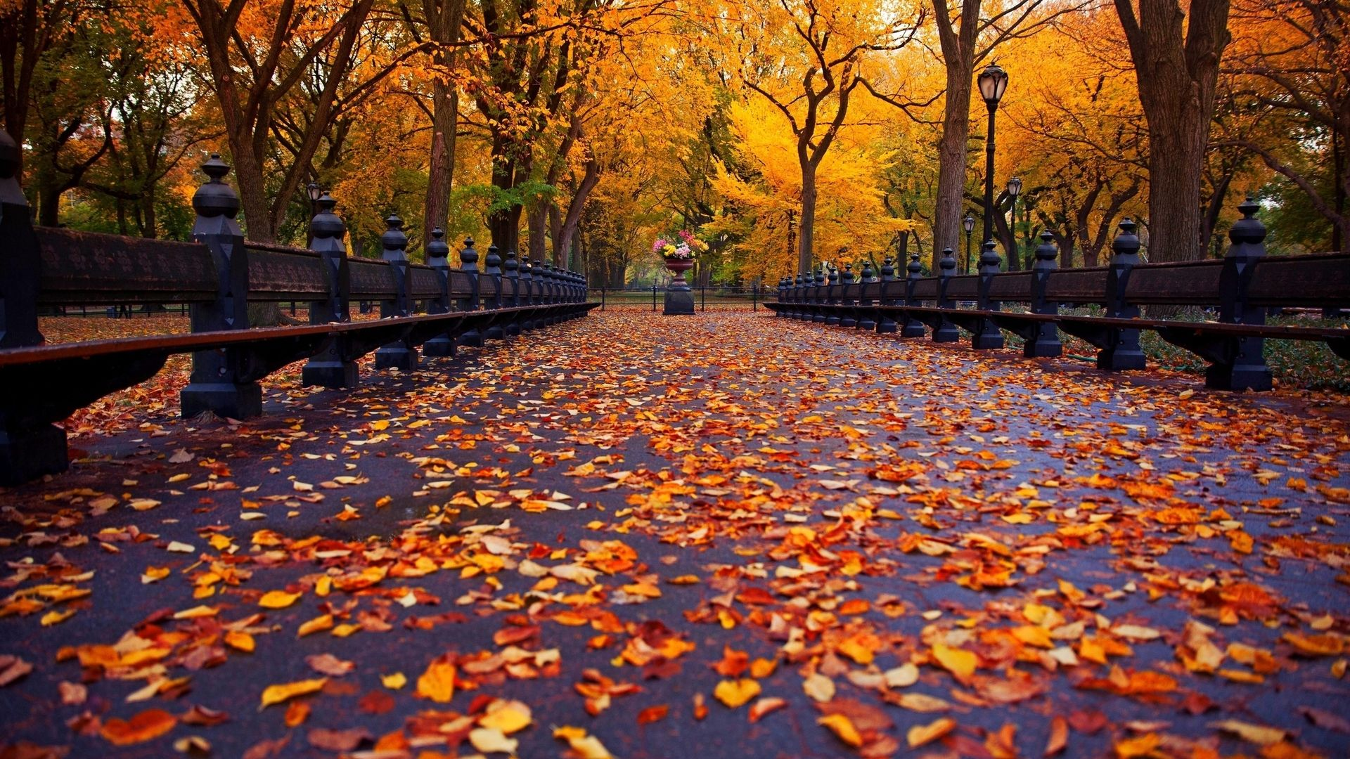 Full Hd Autumn Or Fall Wallpapers With Maple Leaves - Fall Wallpaper Desktop - HD Wallpaper