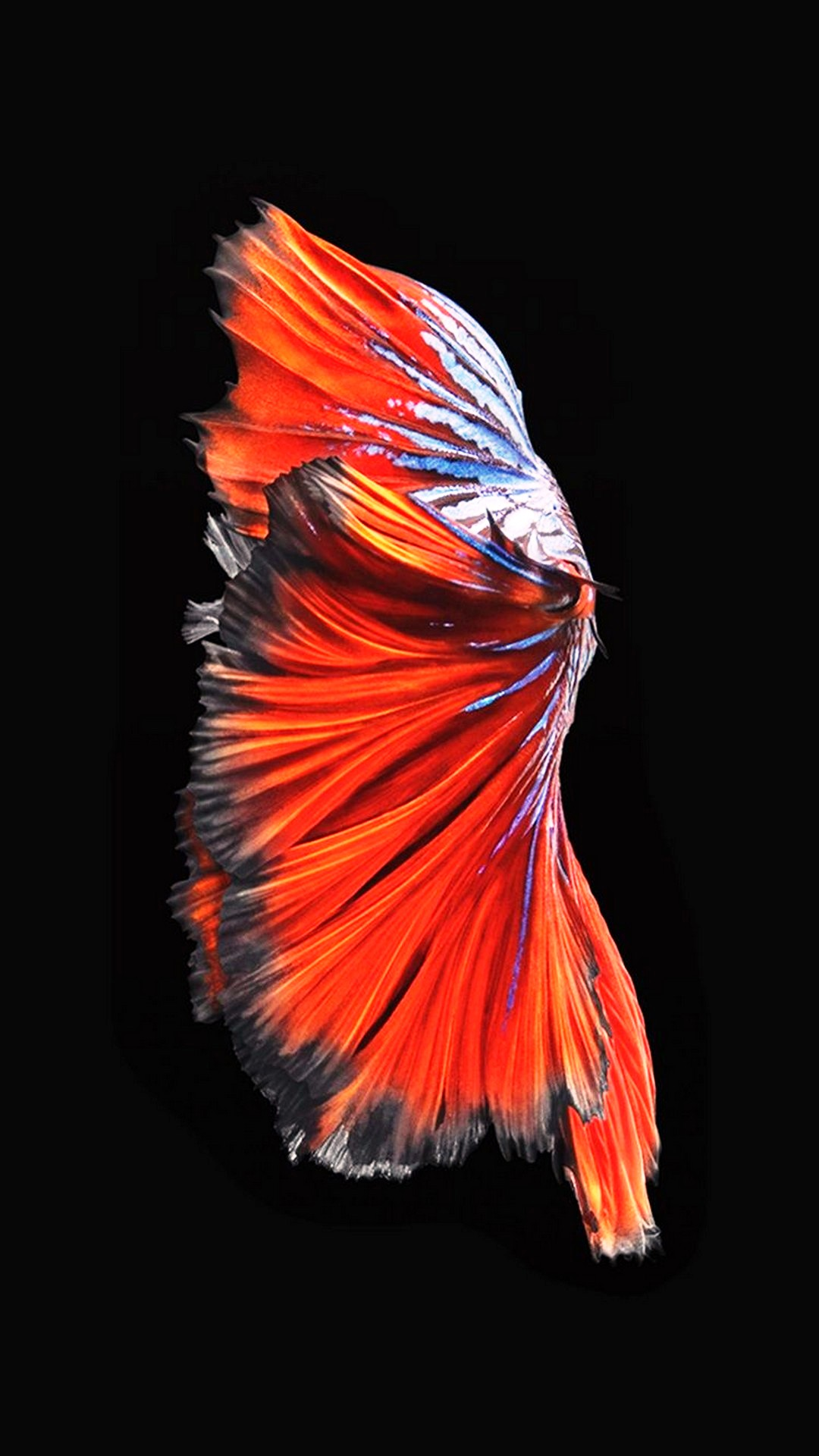 Iphone 6s Plus Wallpaper With High-resolution Pixel - Apple Iphone 6s Plus Fish - HD Wallpaper
