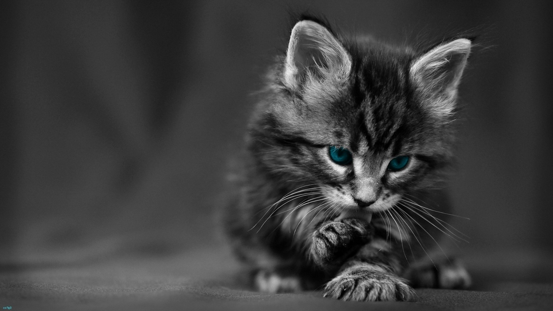 Black And White Kittens Cute Black Cat Hd 1920x1080 Wallpaper Teahub Io