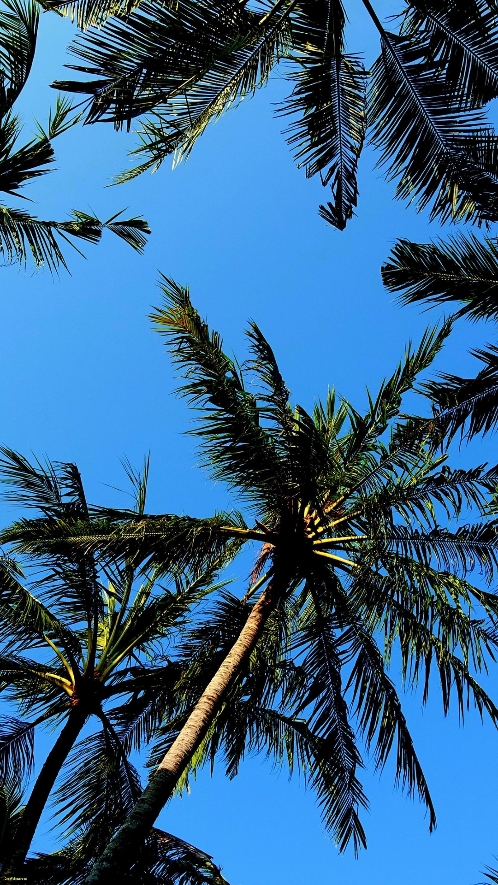 1600x2844, Palm Trees Cool Samsung Galaxy S7 Wallpaper - Palm Tree Wallpaper Hd - HD Wallpaper