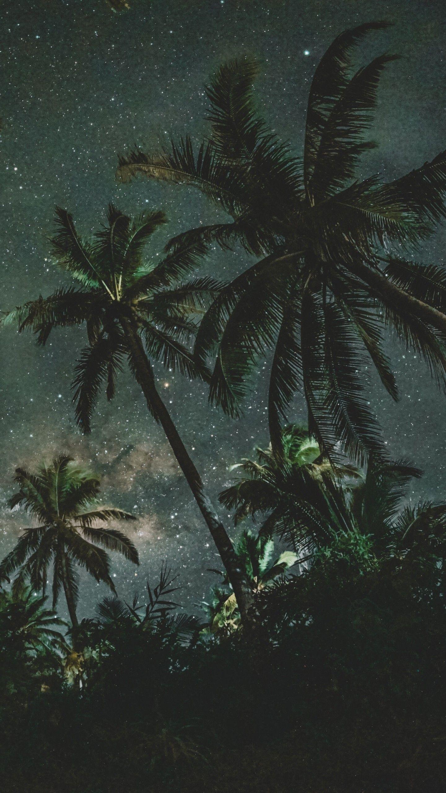 Palm Tree Wallpaper Night - HD Wallpaper