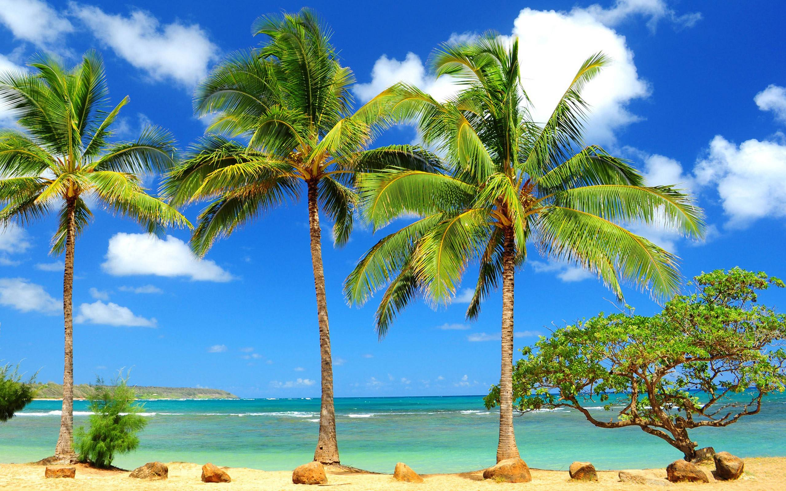 Beach Palm Tree Hd Wallpapers Free Download - Hawaii Beach Palm Trees - HD Wallpaper