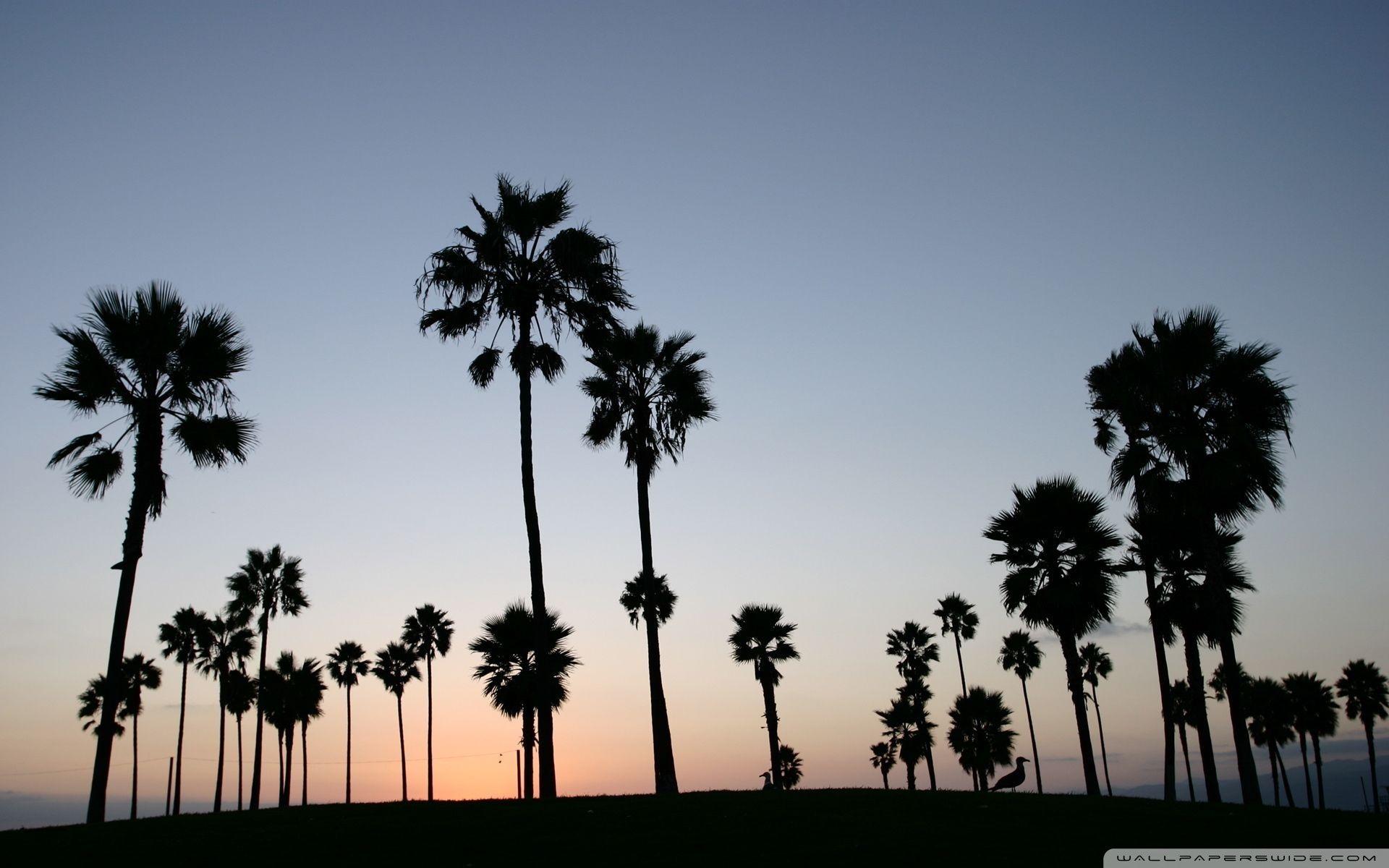 Palm Trees Silhouette ❤ 4k Hd Desktop Wallpaper For - Palm Trees Desktop Wallpaper Hd - HD Wallpaper
