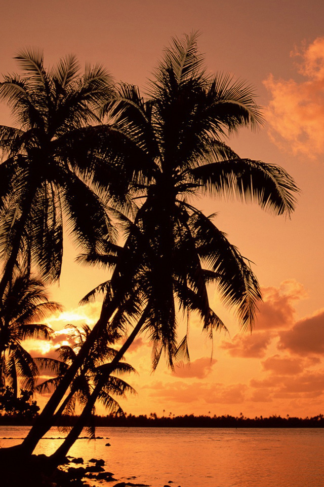 Palm Trees Wallpaper - Palm Tree Wallpaper Iphone Hd - HD Wallpaper