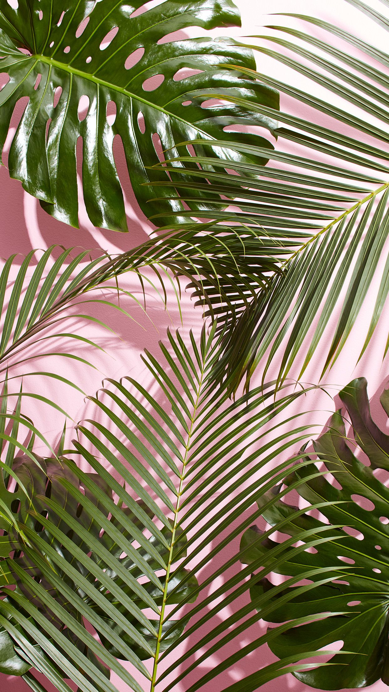 Tropical Palm Leaf Wallpaper   Data-src /img/194373 - Palm Leaves Wallpaper Iphone - HD Wallpaper