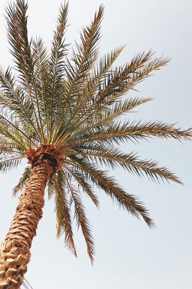 Tropical, Palm Tree, Sky, Outdoors, Coconut Tree - Palm Tree - HD Wallpaper