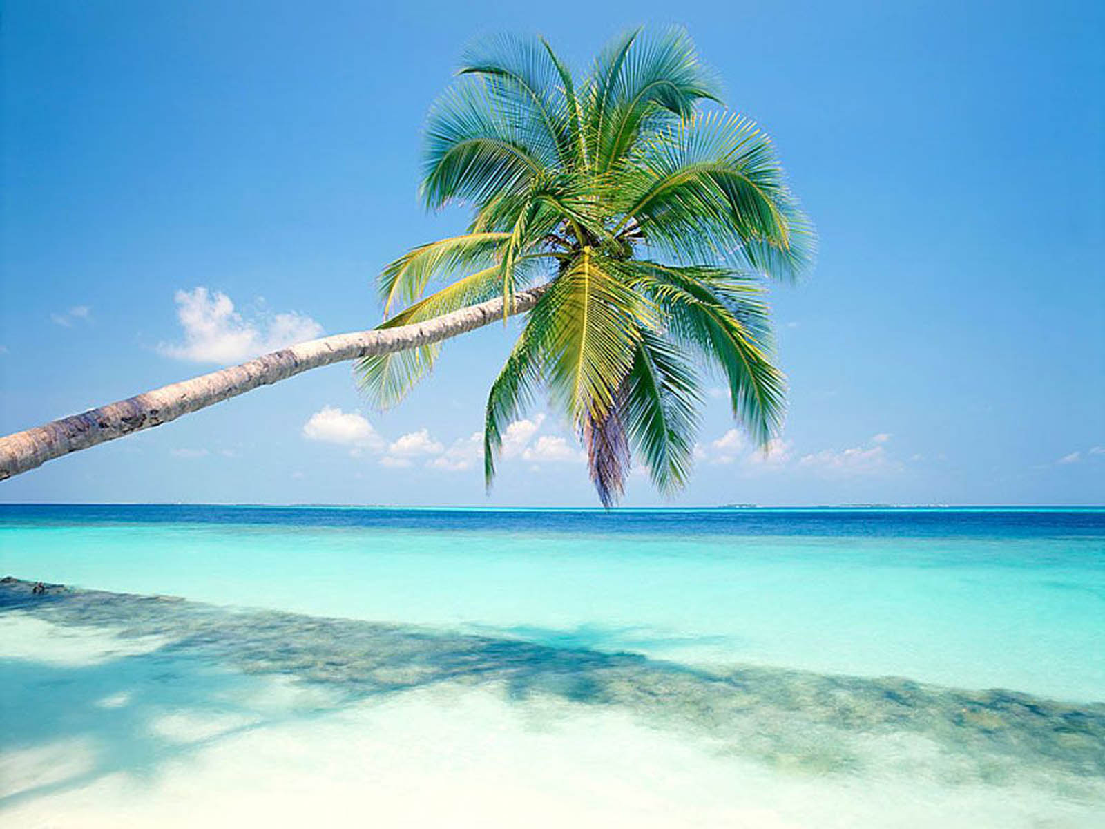 Beach, Sky, Palm Trees Wallpaper Background - Tropical Island Wallpaper Hd - HD Wallpaper