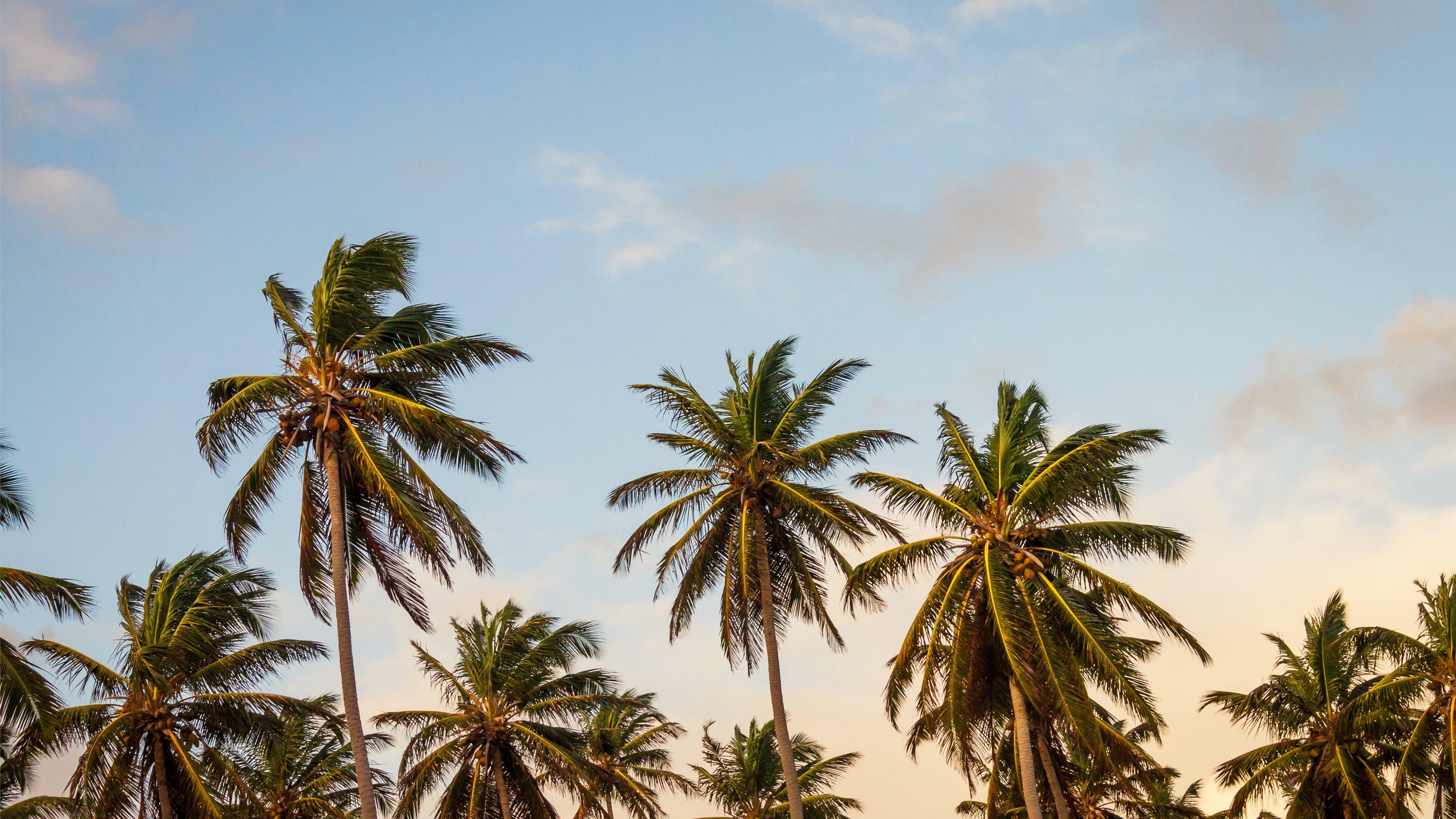 Palm Tree Wallpaper Macbook - HD Wallpaper