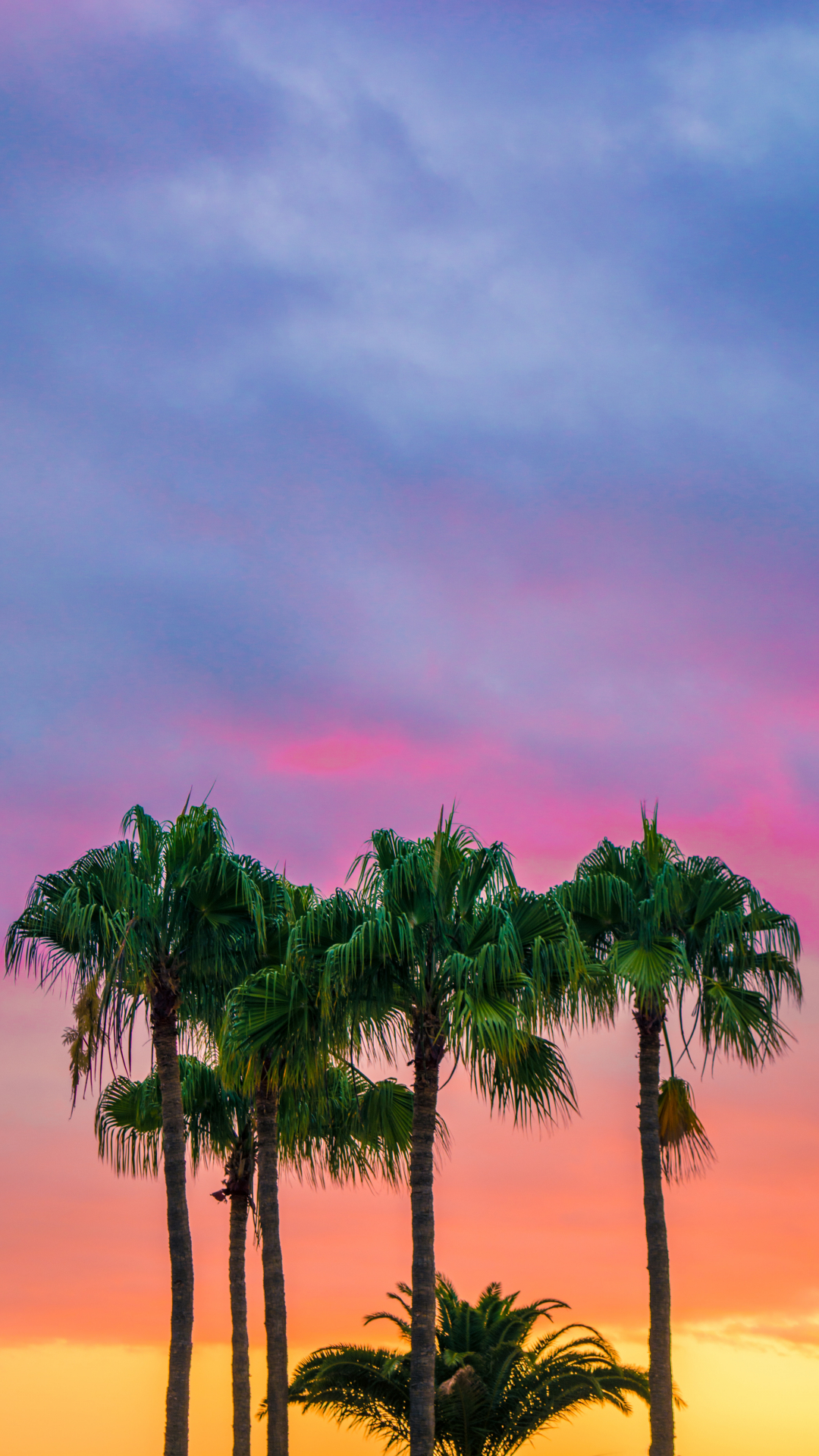Colorful, Palm Trees Iphone Wallpaper - Best Hd Wallappers - HD Wallpaper