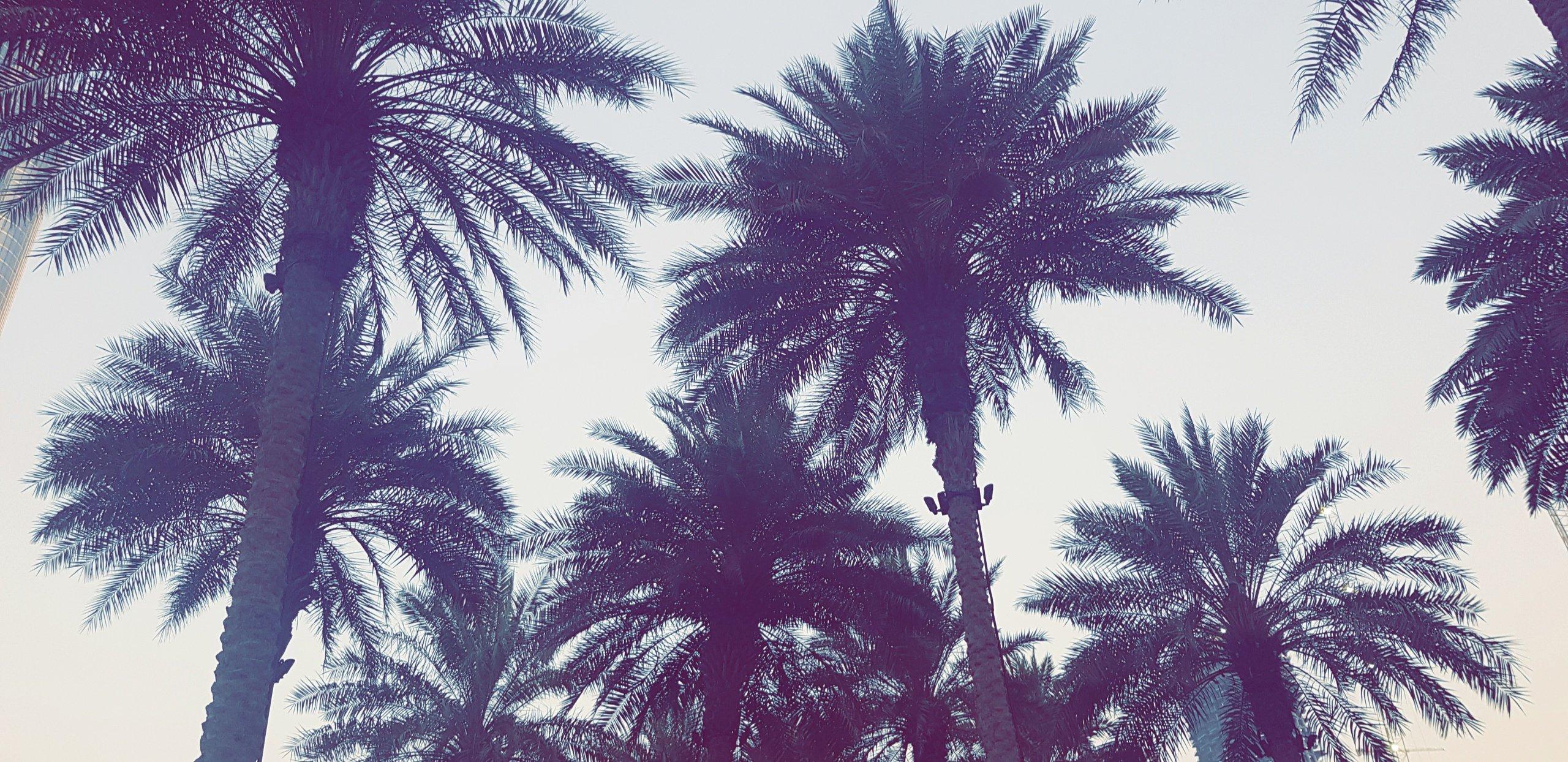 Palm Tree Wallpaper 4k - HD Wallpaper
