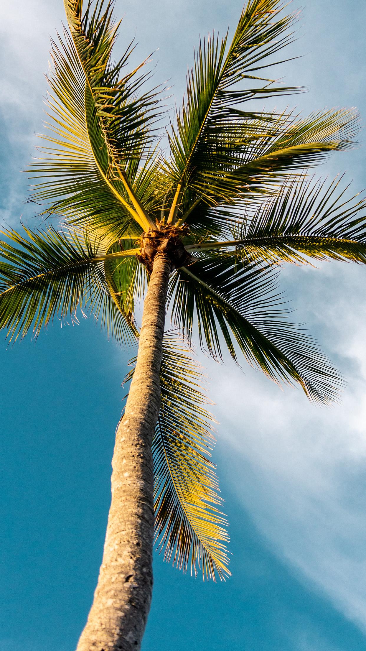 Hd Palm Tree Iphone - HD Wallpaper