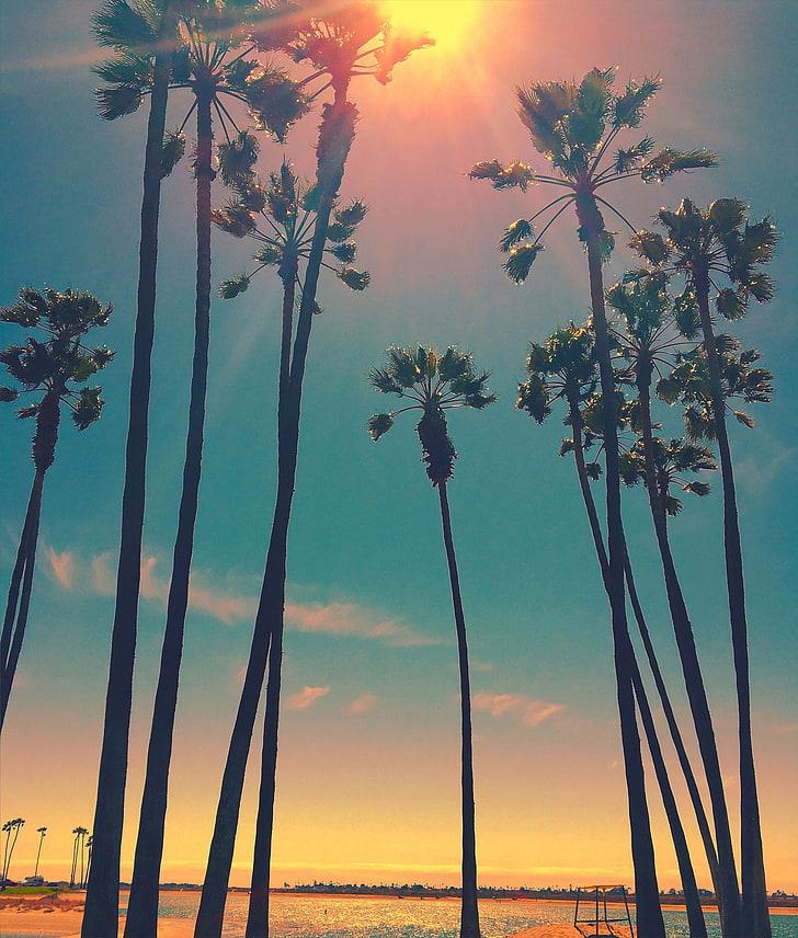 Green Palm Trees Wallpaper, San Diego, Sun, Sky, Sunset, - HD Wallpaper