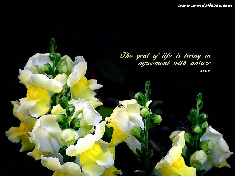 Beautiful Wallpapers With Quotes - Beautiful Quotes On Life - HD Wallpaper