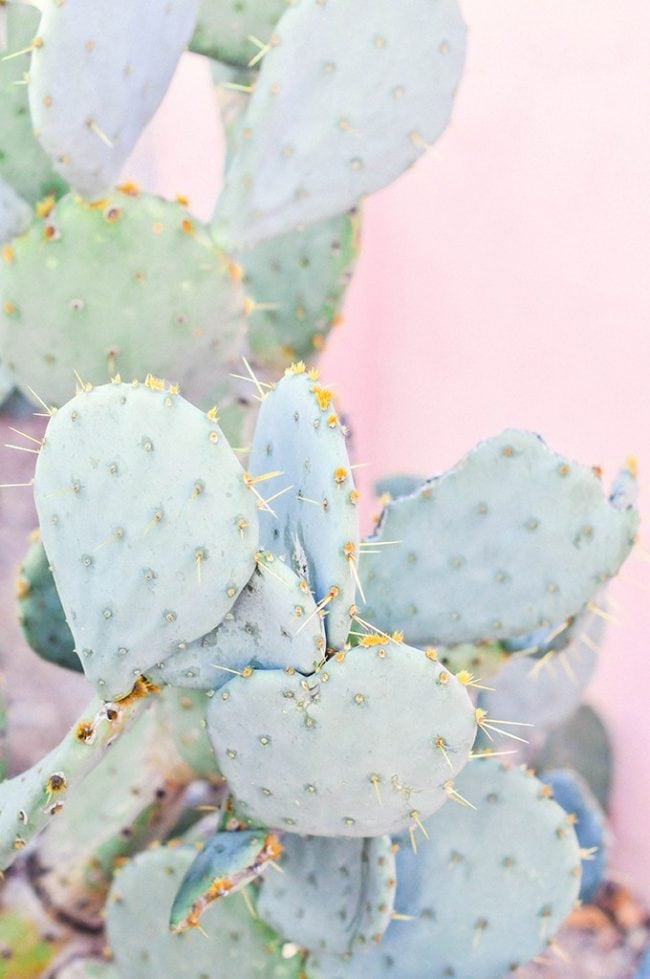 Cute Cactus Wallpaper With Pastel Pink Background Cute Aesthetic Plant Backgrounds 650x979 Wallpaper Teahub Io