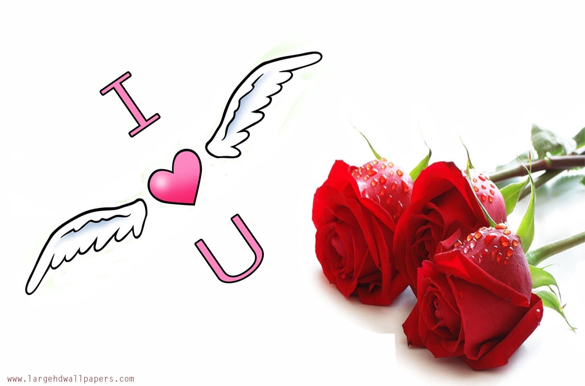 Red Rose Wallpaper I Love U Hd Wallpaper I Love You - Love You Rose Photo Hd - HD Wallpaper