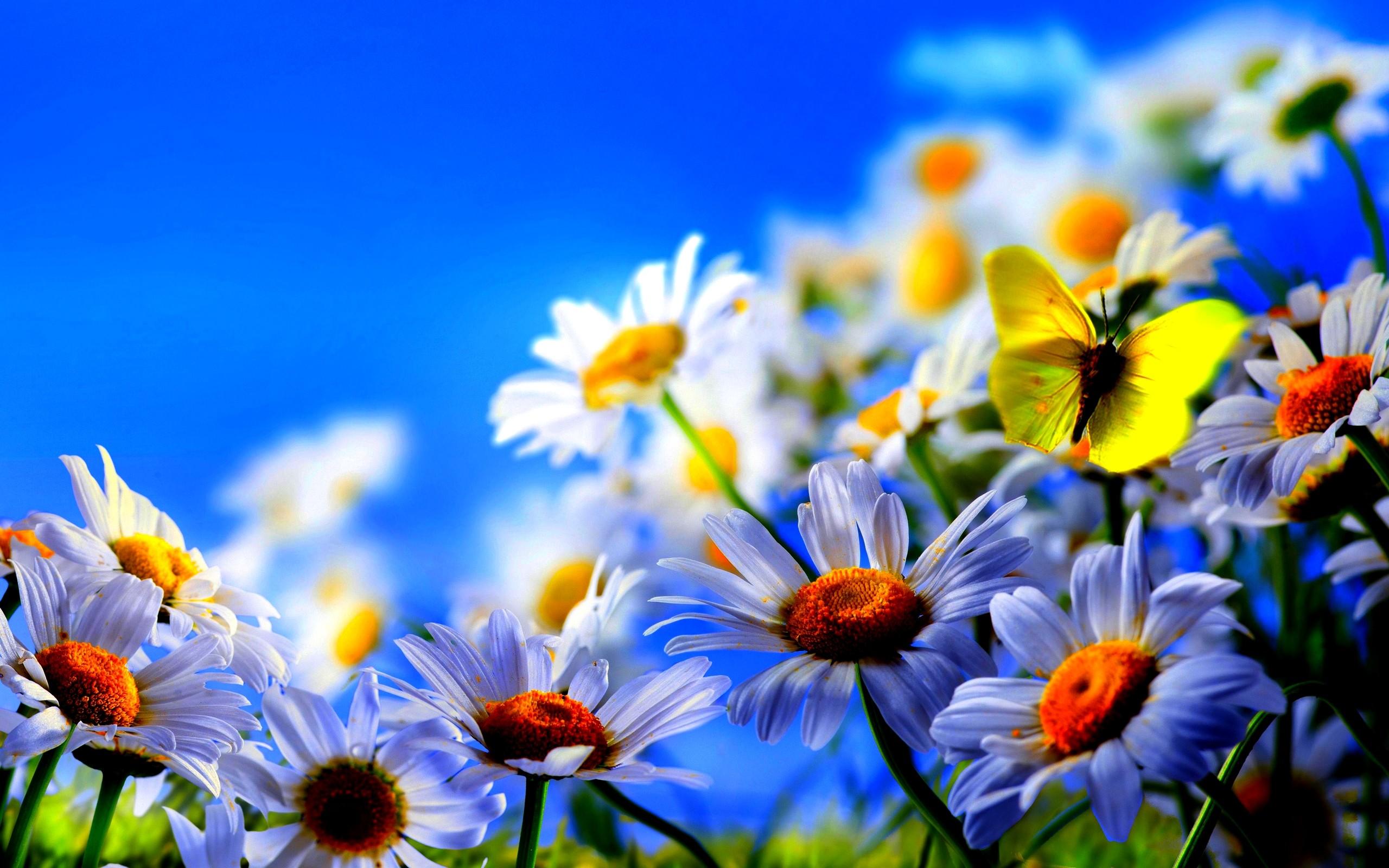Spring Flowers Butterflies Background Hd Wallpaper - Spring Wallpaper Desktop - HD Wallpaper